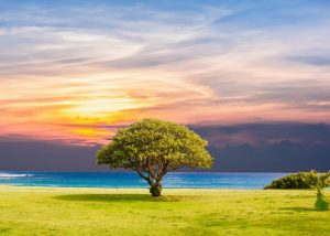 tree of life levensboom